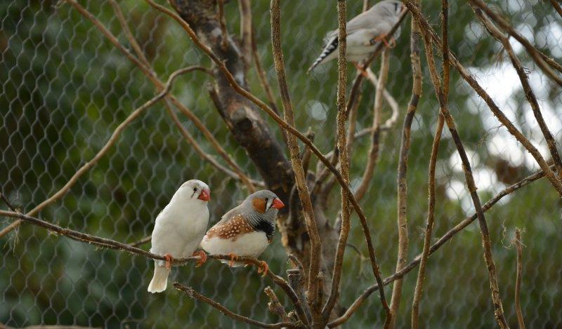 Für Vogelliebhaber