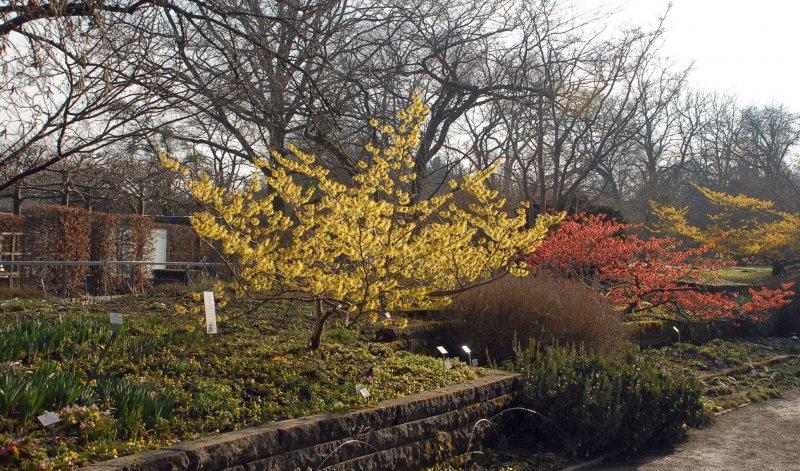 München Nymphenburg Blüten Im Winter Führung Im Botanischen