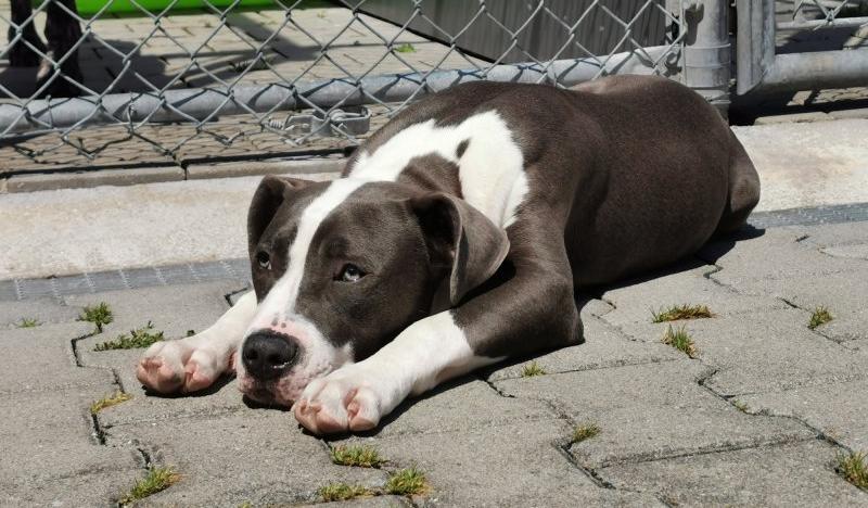Ein Herz Fur Jede Rasse Tierschutzverein Munchen